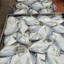 Frisch Fisch einkaufen - Der Einkaufsratgeber
