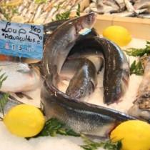 Fisch frisch auf den Teller: So geht es!